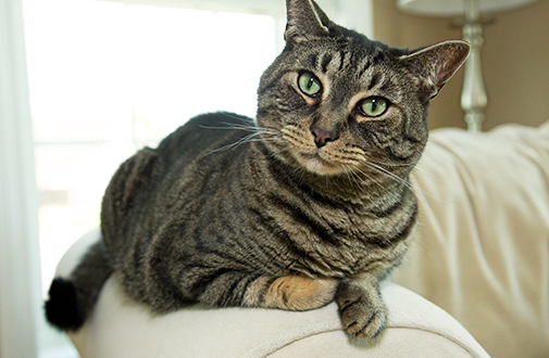 10 Causes Why Your Cat is Spraying