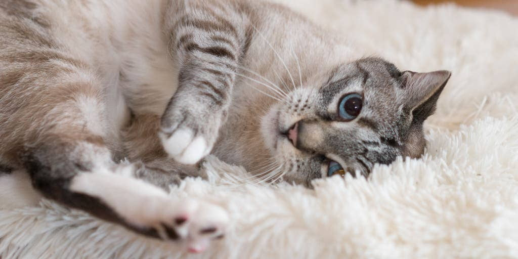 6 Health Mistakes Cat Owners Make