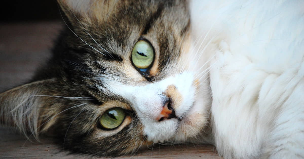 Aging Cats: Behavior Changes, Problems, and Treatments