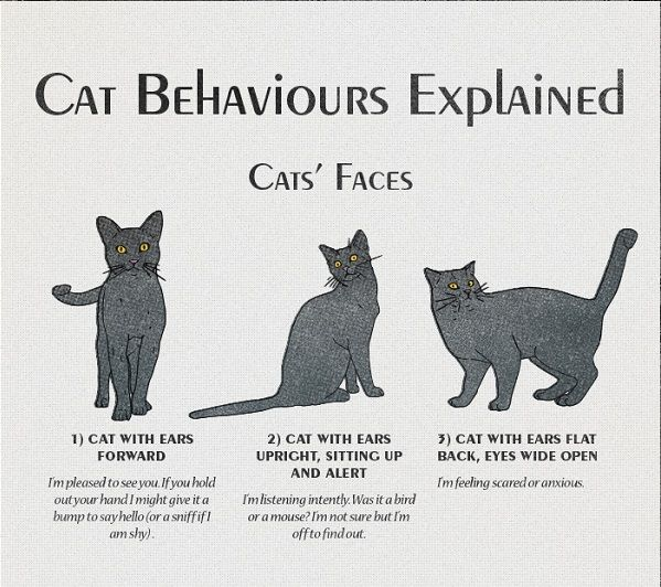 All About Cat Behaviors and What They Signify