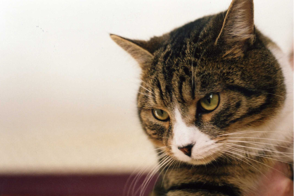 Cat Combating: Why Does It Take place?
