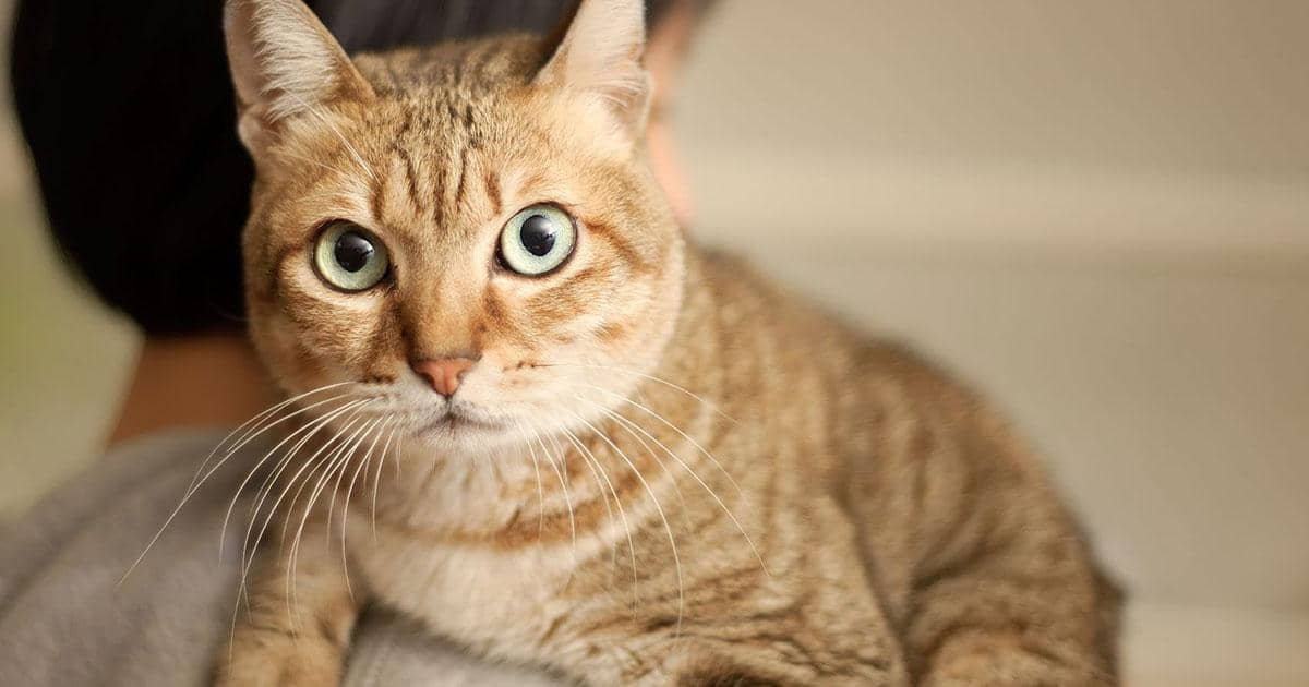 Cat Nutrition for a Healthy Coat
