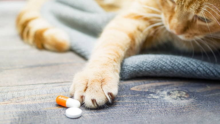 Cat Vitamins and Supplements: Do They Work?