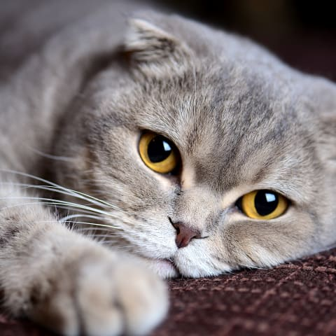 Expanding Our Information of Cats: Cat DNA Can Notify You a Ton