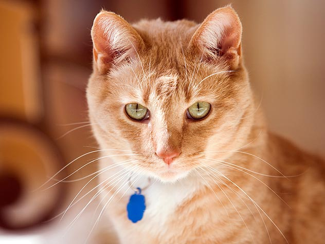 Guidebook to Spaying and Neutering Cats