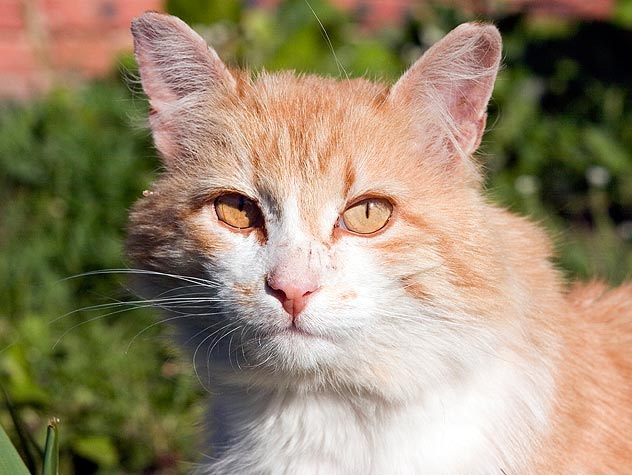 How Cat Treatment Sweetens Daily life