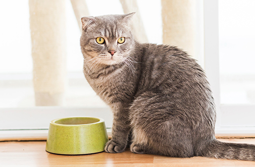 How to Cat Care - The Realities of Cat Training in Ten Minutes
