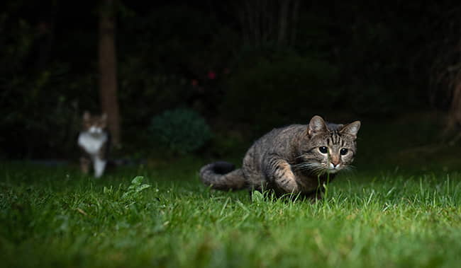 Nighttime activity in Cats
