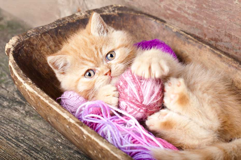 Overcoming 7 Obstacles to Cat Ownership