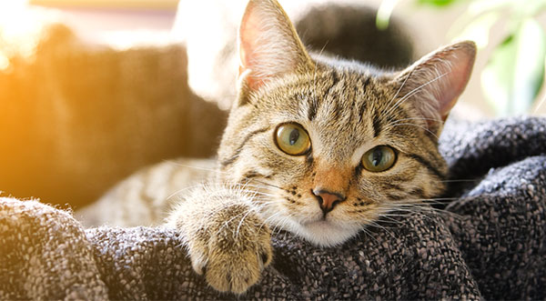 Pet dogs and Cats - Neuter Or Not?