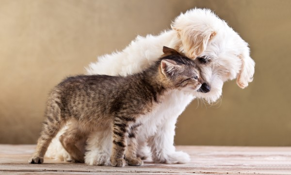 Pet Grooming Recommendations to Make Hair Brushing Your Pet Uncomplicated