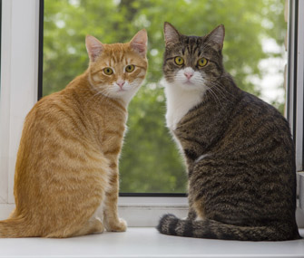 Residence Cat Care - Dietary and Grooming Wants of Your Pet