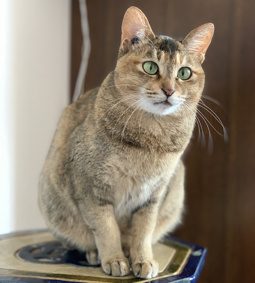 Right Pet Cat Care - What Your Beloved Cats Require