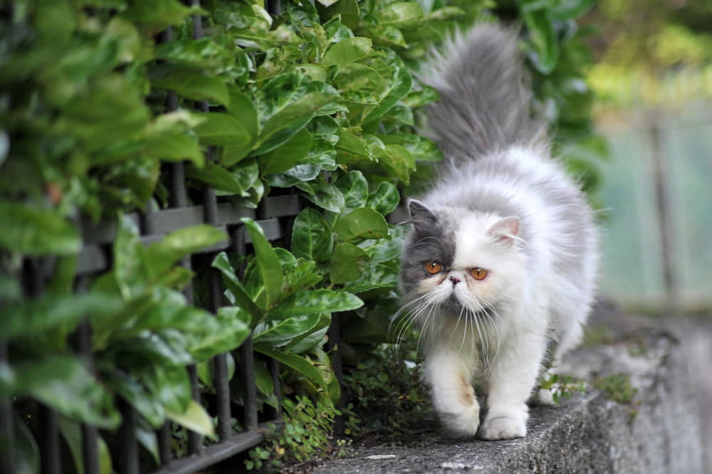 Should You Have an Indoor Cat or an Outdoor Cat?