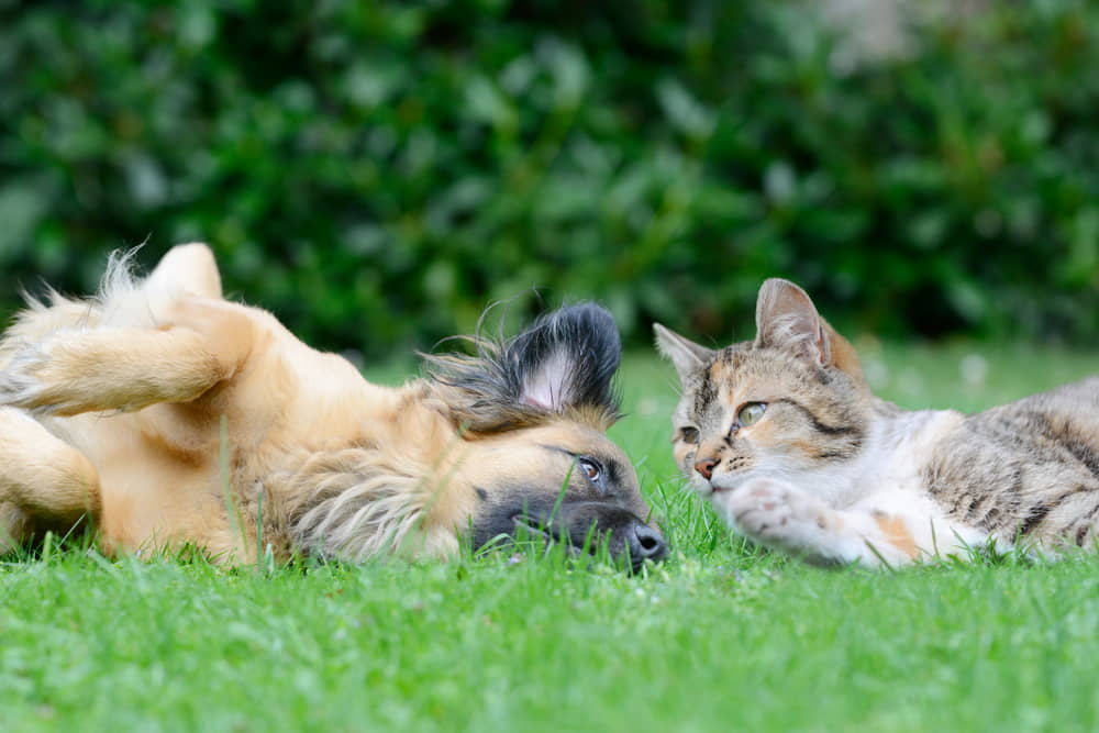 taste-deterrents-for-cats-and-dogs