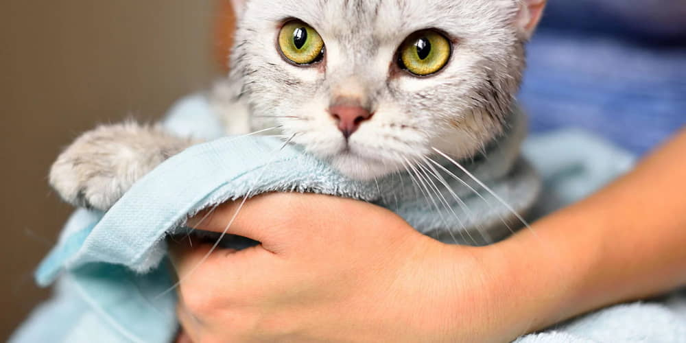Tips for How to Bathe Your Cat or Kitten