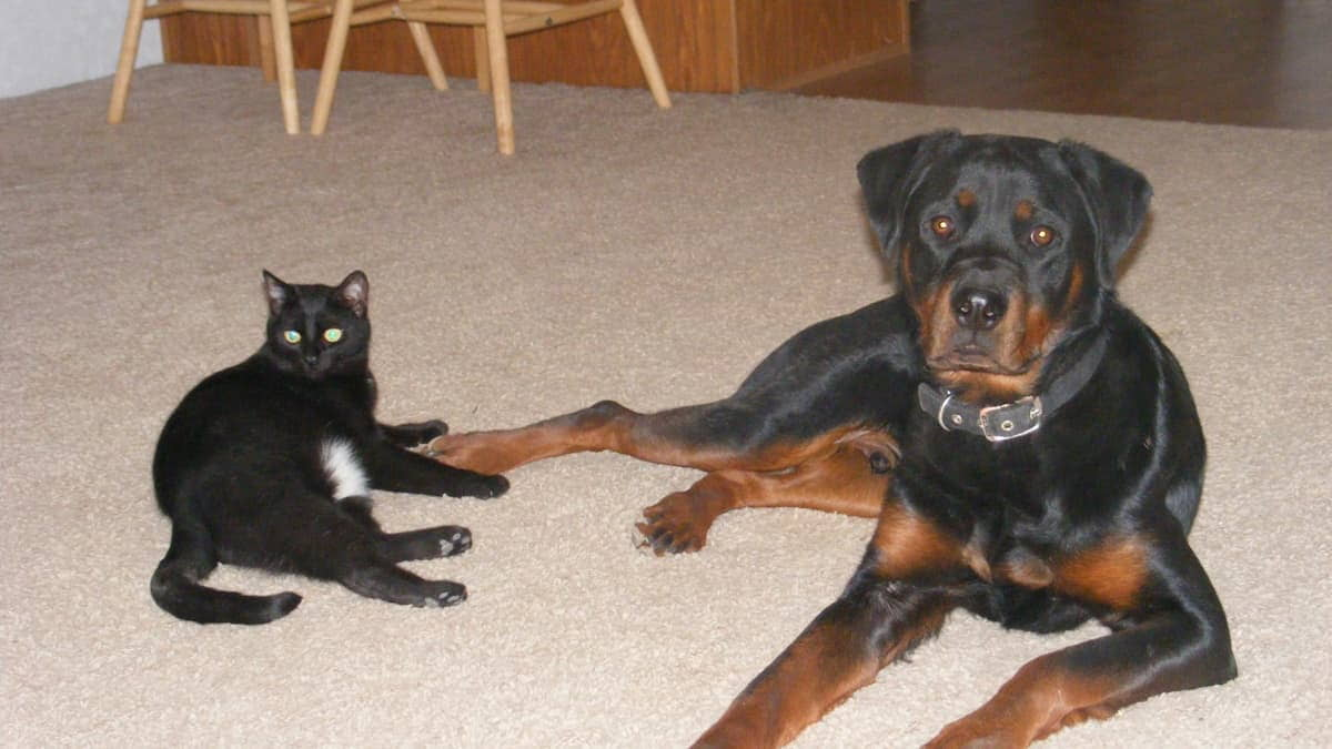 Top 10 Dog and Cat Injuries