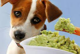 4 Poisonous Foodstuff for Canines