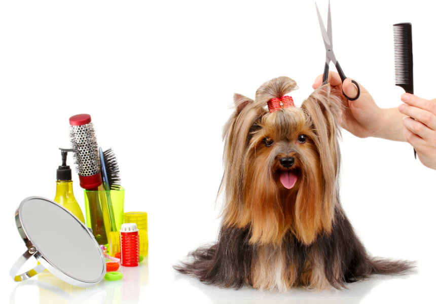 Canine Grooming Fundamental principles For New Owners