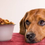 Caring for a Dog with Food Allergies