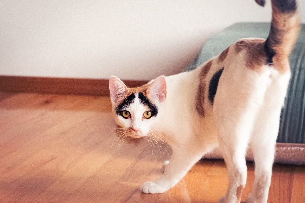 Cat Treatment Ideas - Results in of Cat Spraying