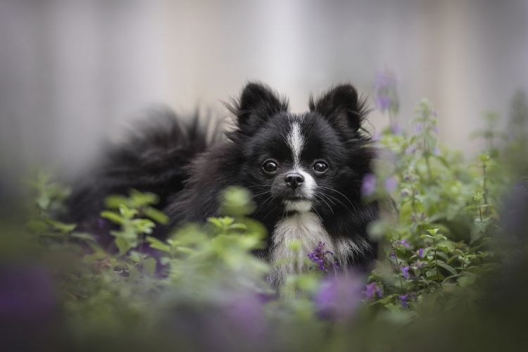 Catnip for Dogs: Is it safe?