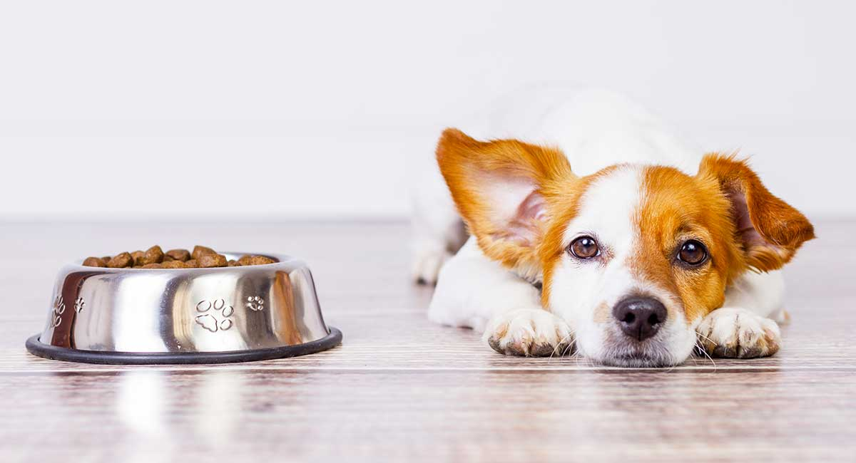Dog Not Eating? Possible Causes and Appetite Solutions