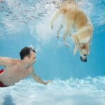 Fitness Buddies: Exercising With Your Dog