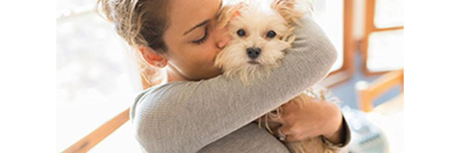 Grooming Your Canine For Love