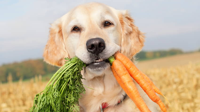Healthy Treats for Your Dog