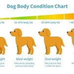 Help for Overweight Dogs