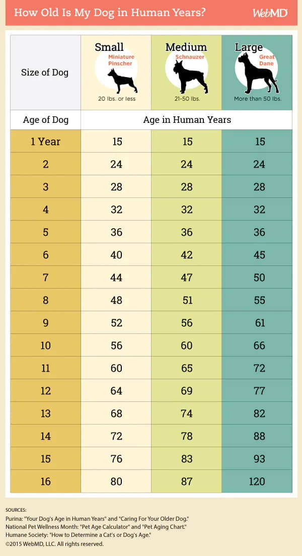 How to Figure Out Your Dog's Age