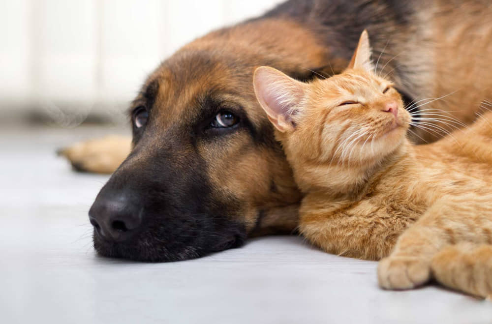 Pet Vaccines Schedules for Cats and Dogs