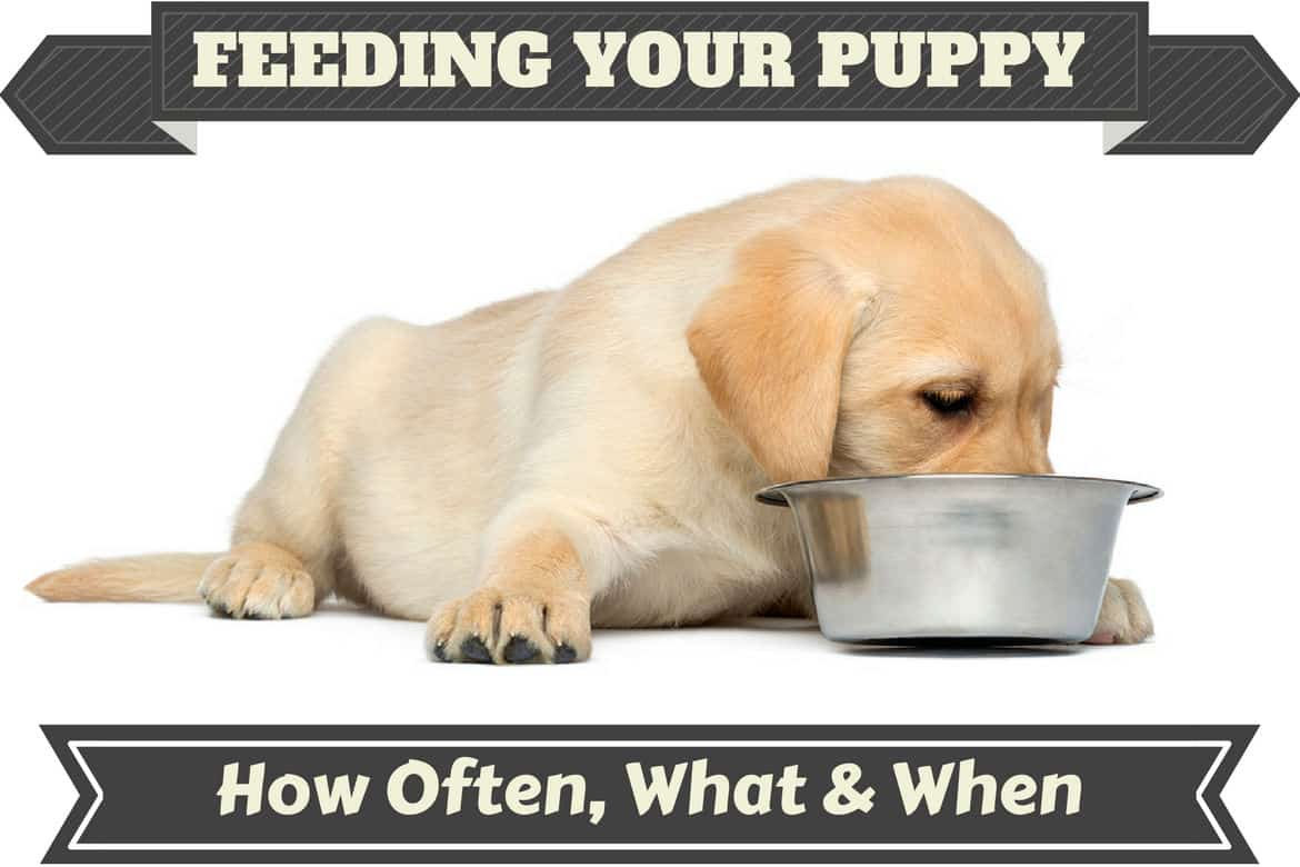Puppy Food - Types, Feeding Schedule, and Nutrition