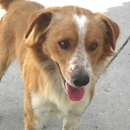 Shelter Canines - Will You Undertake 1 As Your Upcoming Pet?