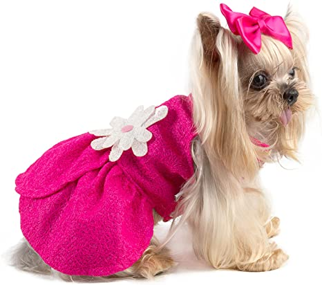 Small Dog Clothing - Summer Fashions for your Canine