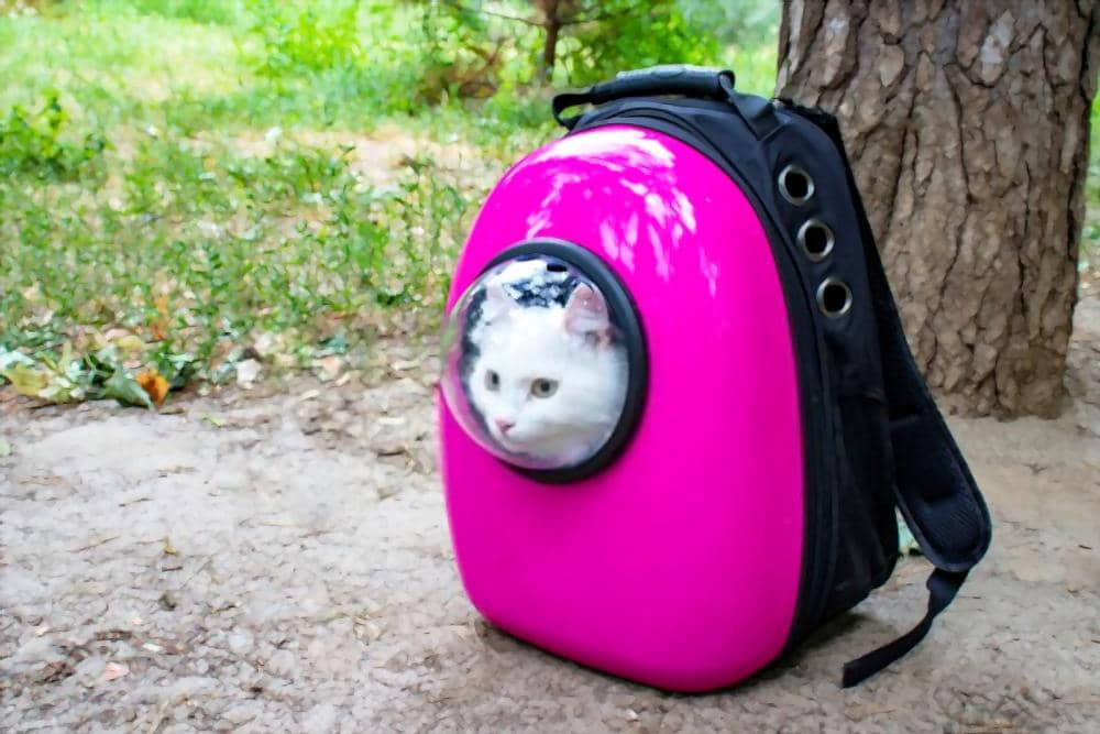 The Best Cat Backpacks (Reviews)