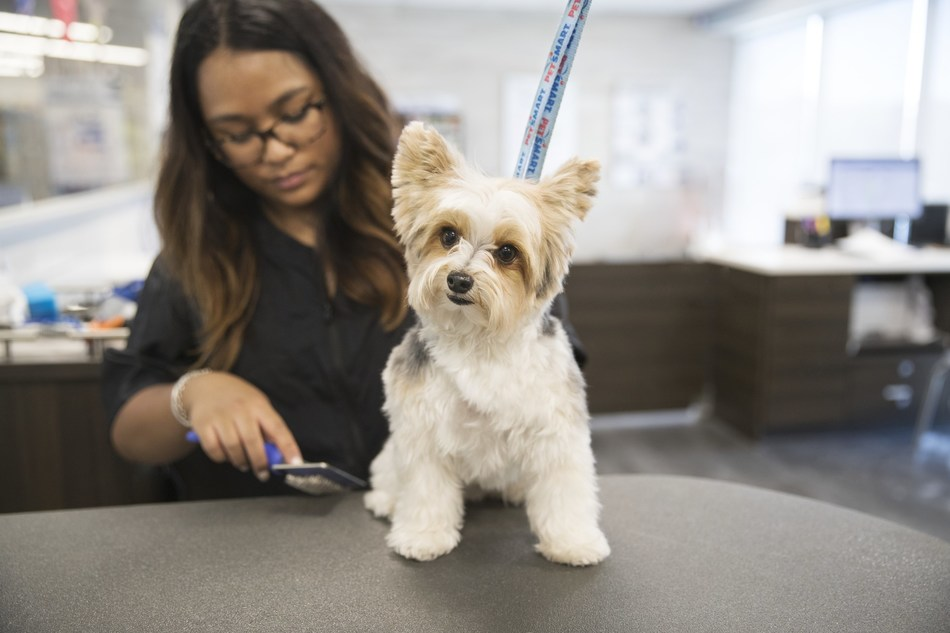 The Offical Canine Grooming Offer Overview