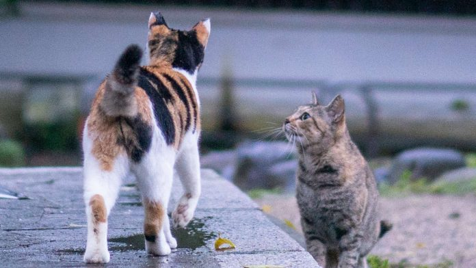 Things To Know About Abused Cats