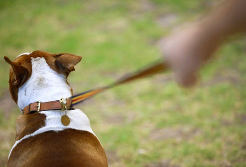 Risky Mistakes Pet Owners Make