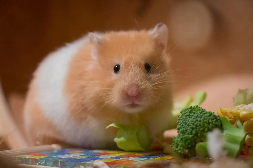 Food Diet and Treats For Hamsters
