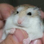 How Much Does A Hamster Cost? (Including Care Costs)