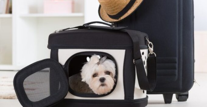 The Best Dog Carriers (Reviews)