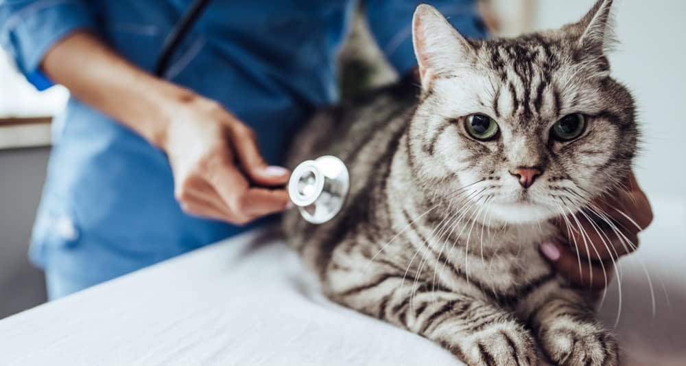 Cat Asthma: Symptoms and Treatments