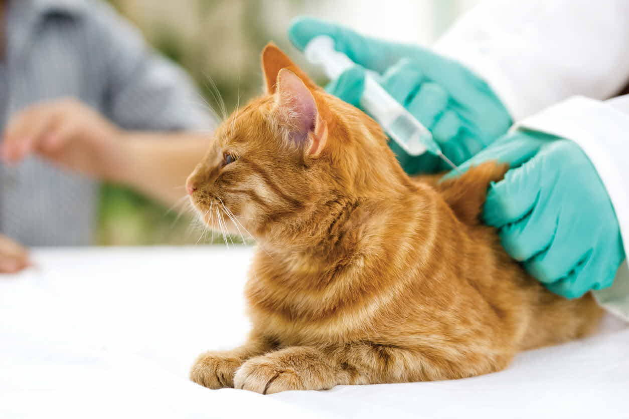 Pet Vaccinations: Understanding Vaccinations for Your Cat or Dog