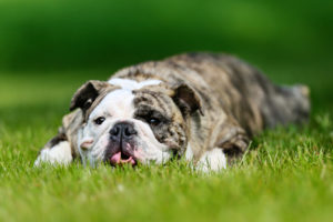 Sneaky Strategies for a Slimmer Pooch