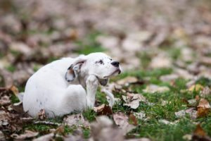Simplifying Fleas, Ticks and Worms