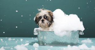 A Head to Toe Guide to Washing Your Dog