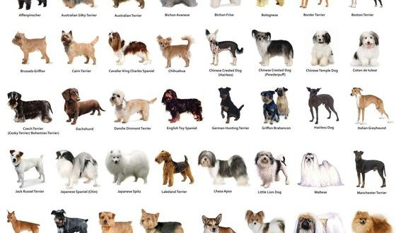 The Right Dog Breed For Your Family