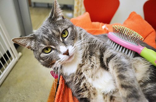 Necessary tips when get the cat: All About Pet And Animals Care